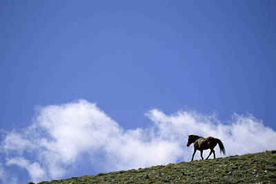A Wild Mustang On The Crest Of A Hill Art Print by Gordon Wiltsie
