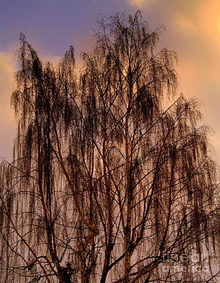 Photograph - A Willow For Mandy by Michael Canning