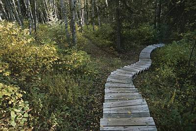Prince Albert National Park Photograph - A Wooden Staircase Winds by Raymond Gehman