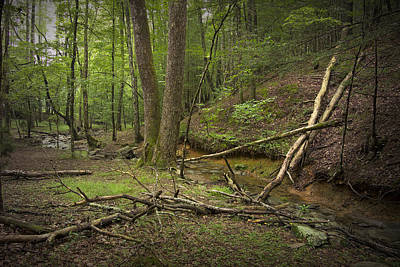 A Woodland Scene In Cades Cove No.471 Art Print by Randall Nyhof