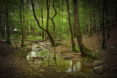 A Woodland Stream In Cades Cove No.472 Art Print
