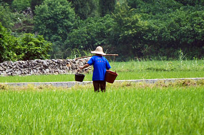 Photograph - A Yangdi Farmer In The Rice Paddy by Harvey Barrison