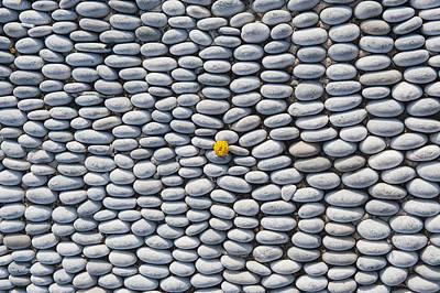 A Yellow Wildflower Growing Amongst An Arrangement Of Smooth Stones Art Print