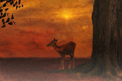 A Young Deer Art Print by Tom York Images