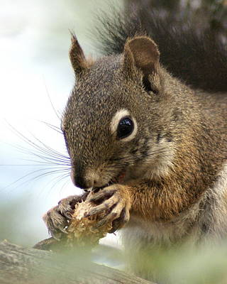 Photograph - A Young Squirrel by Ben Upham III