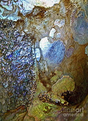Abalone Wall Art - Photograph - Abalone Essence by Gwyn Newcombe
