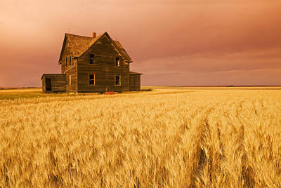 Without People Photograph - Abandoned Farm House, Wind-blown Durum by Dave Reede