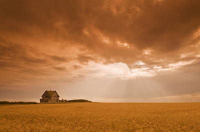 Abandoned Farm In Durum Wheat Field Art Print by Dave Reede