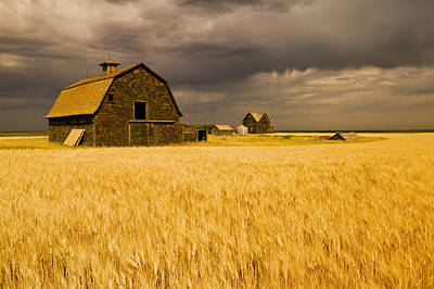 Abandoned Farm, Wind-blown Durum Wheat Art Print by Dave Reede