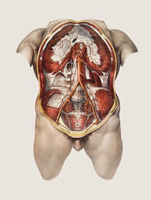 Abdominal Aorta Art Print