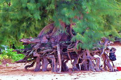 Photograph - Above Ground Roots On Tamarisk Tree  by Michele Penner