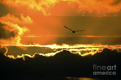 Photograph - Above The Clouds by Johanne Peale