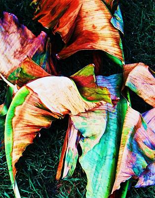 Photograph - Abstract Banana Leaf by Todd Sherlock