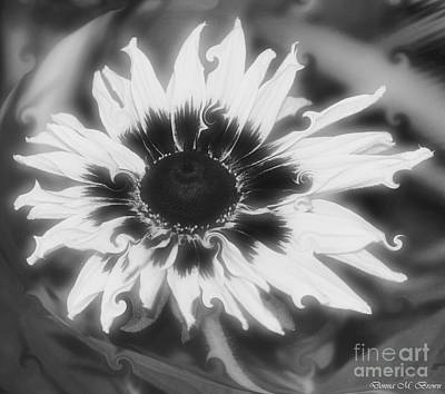 Photograph - Abstract Daisy by Donna Brown