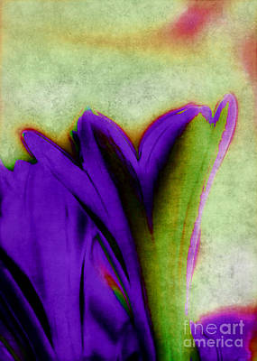 Photograph - Abstract Flowers by Judi Bagwell
