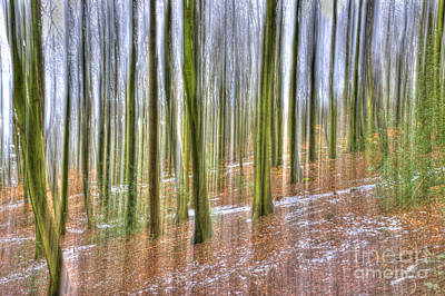Photograph - Abstract Forest by David Birchall