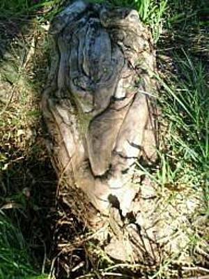 Treeroots Photograph - Abstract Lion In Waiting by Mary Ann Tidwell Broussard