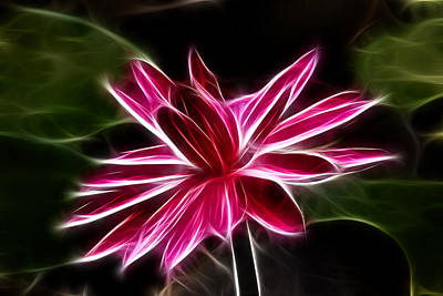 Abstract Lotus Original by Abhishek Singh