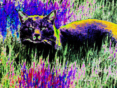 Abstract Of Tabby Art Print
