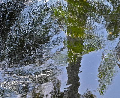Photograph - Abstract Palm Reflections by Kirsten Giving