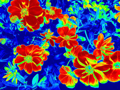 Computer Generated Flower Photograph - Abstract Photography 3 by Kim Galluzzo Wozniak