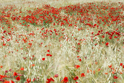 Abstract Poppies Art Print by Guido Montanes Castillo