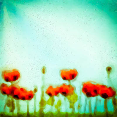 Abstract Flowers Royalty-Free and Rights-Managed Images - Abstract Poppies by Tom Gowanlock