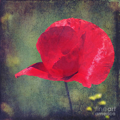 Abstract Poppy Art Print by Angela Doelling AD DESIGN Photo and PhotoArt