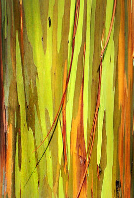 Photograph - Abstract Rainbow Eucalyptus 1 by Marilyn Hunt