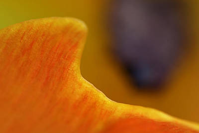 Photograph - Abstract Tulip Photography Art by Juergen Roth
