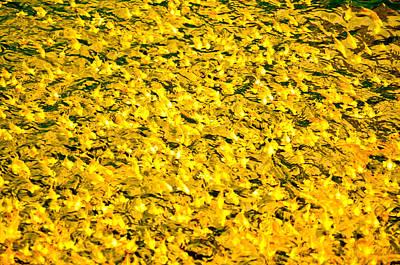Photograph - Abundance 2 by Chua  ChinLeng