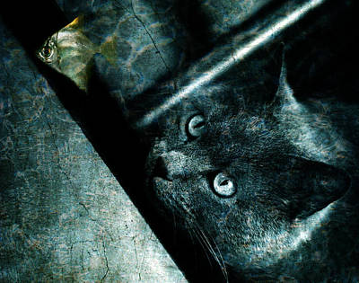 Manipulation Photograph - Abyss Cat by Laura Melis