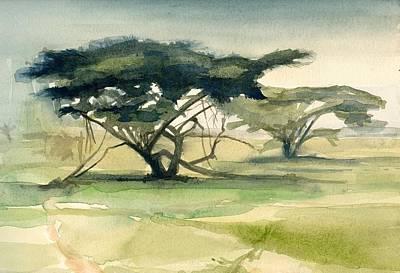 Acacia Art Print by Stephanie Aarons