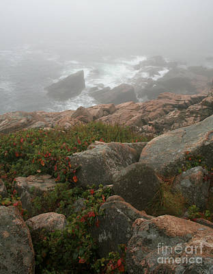 Photograph - Acadia National Park Foggy Coast by Chris Hill