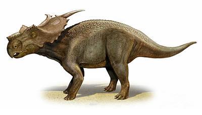 Achelousaurus Horneri, A Prehistoric Art Print by Sergey Krasovskiy