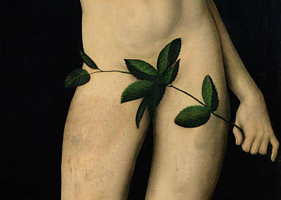 Adam And Eve Painting - Adam by The Elder Lucas Cranach