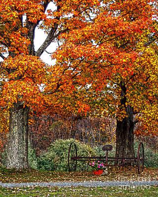 Fall Foliage Drawing - Adirondack Autumn Beauty by Diane E Berry