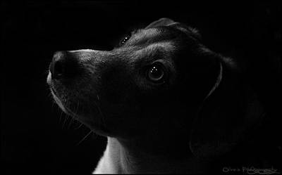Rotty Photograph - Admiration by Alivia Houdek