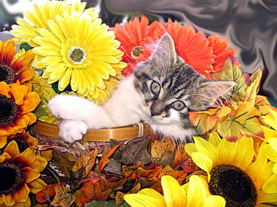 Adorable Baby Cat - Cool Kitten Chilling In A Flower Basket - Thanksgiving Kitty With Paws Crossed Print by Chantal PhotoPix