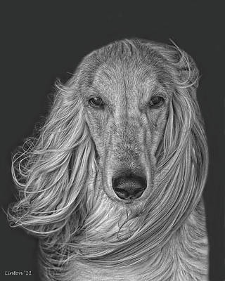 Pure Breed Digital Art - Afghan Hound   by Larry Linton