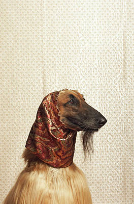 Afghan Hound Wearing Scarf Art Print