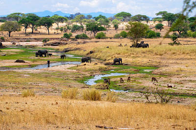 Photograph - Africain Wilderness - L'afrique Sauvage by Michel Legare