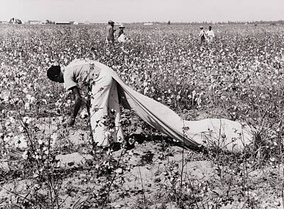 African American Day Laborer Picking Print by Everett