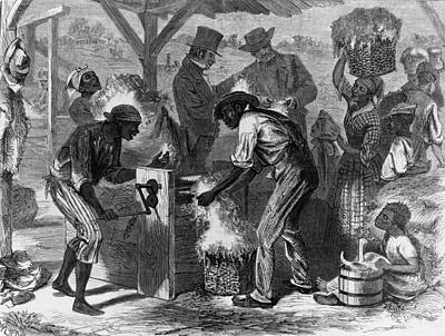 African American Slaves Using A Cotton Art Print by Everett