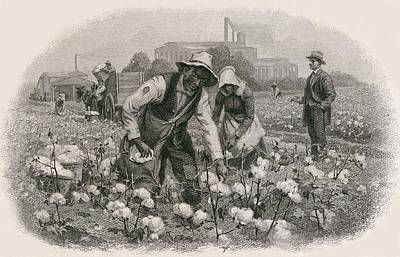 African Americans Pick Cotton Art Print by Everett