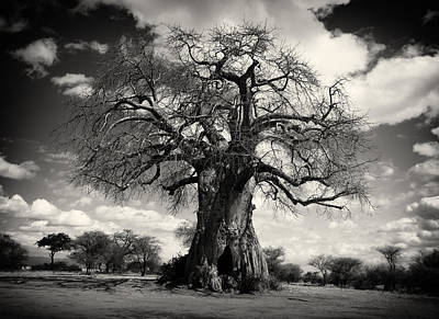 African Baobabs Tree Art Print by Jess Easter