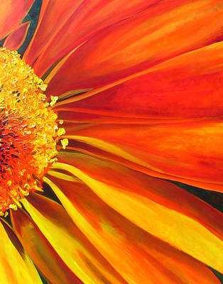African Daisy Art Print by Raette Meredith