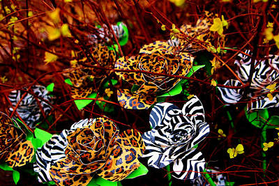 Photograph - African Duck Tape Wildflowers by Laura  Grisham