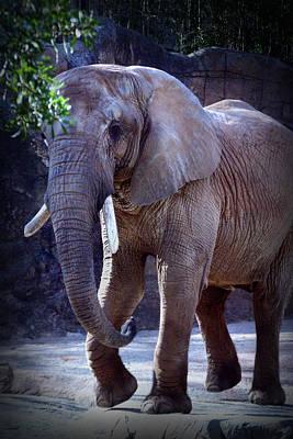 Photograph - African Elephant by Kelly Hazel