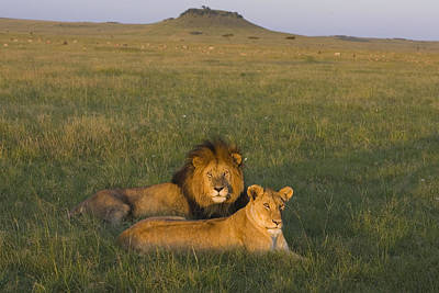 Photograph - African Lion Couple In Maasai Mara by Suzi Eszterhas